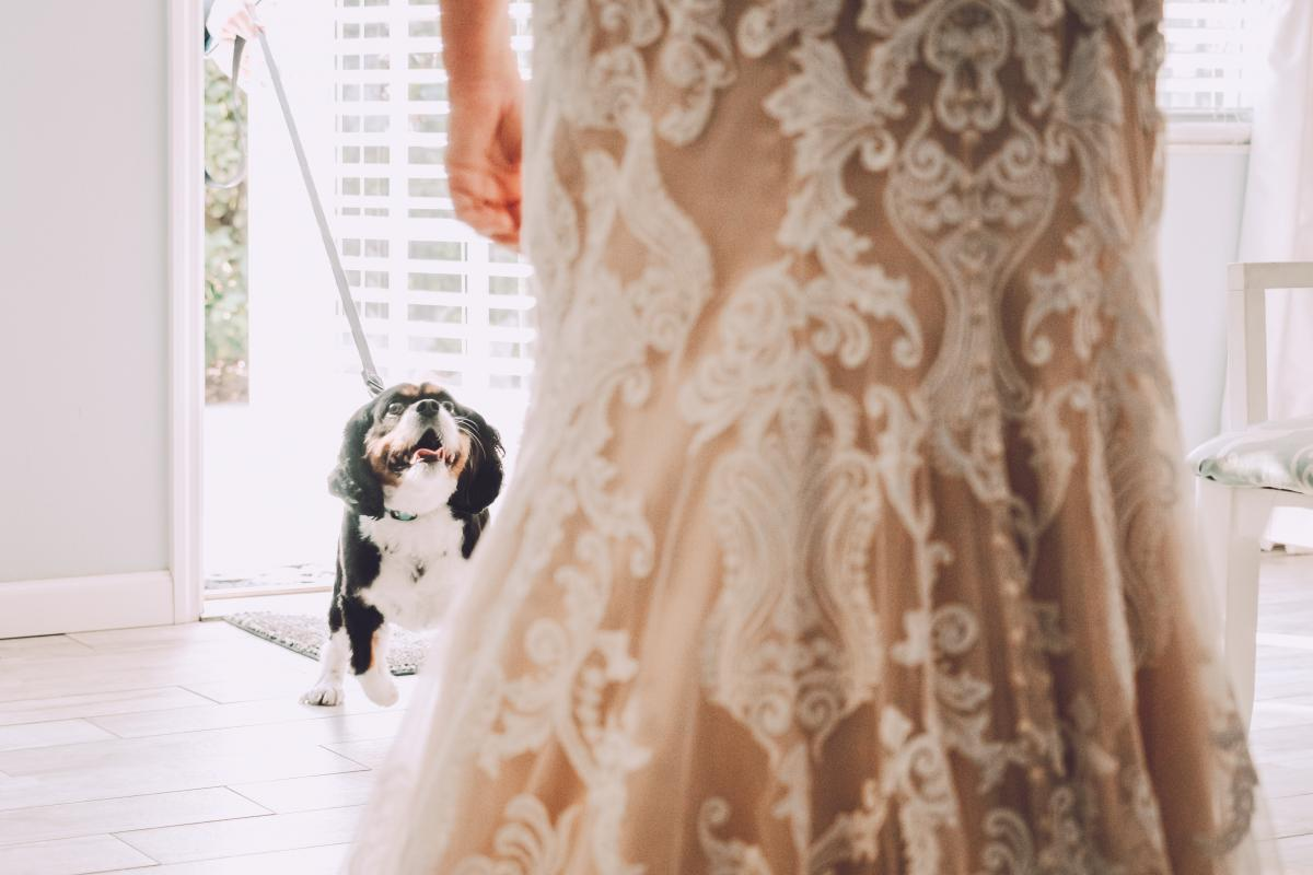 First look with the dog of honor